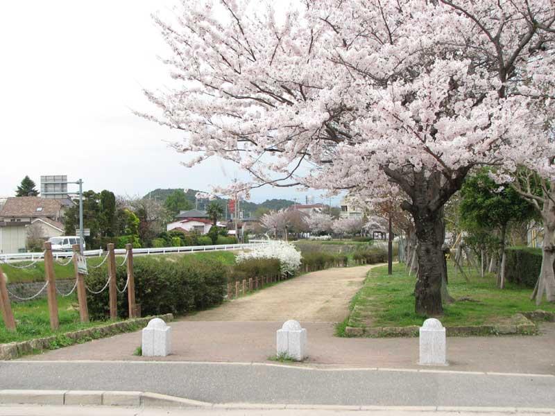 春の有馬川緑道
