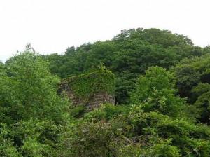 2009年春の橋脚 木々に覆われた古城のようです