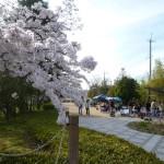有馬川緑道公園