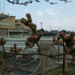 有馬川・平成橋の桜