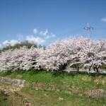 名来神社近辺の有馬川東岸