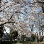名来(かえる)公園