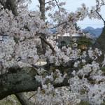有馬川緑道から明徳寺