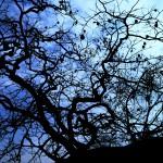 奨励賞・(小学生)堀田恭平  大きな柿の木