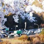奨励賞(春の大渋滞) :北六甲台から中国道を見る