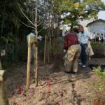 ユキヤナギの記念植樹