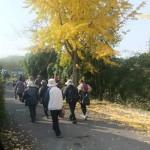 有馬川の黄葉
