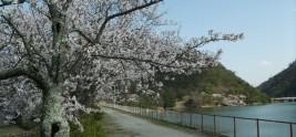 金仙寺湖の春