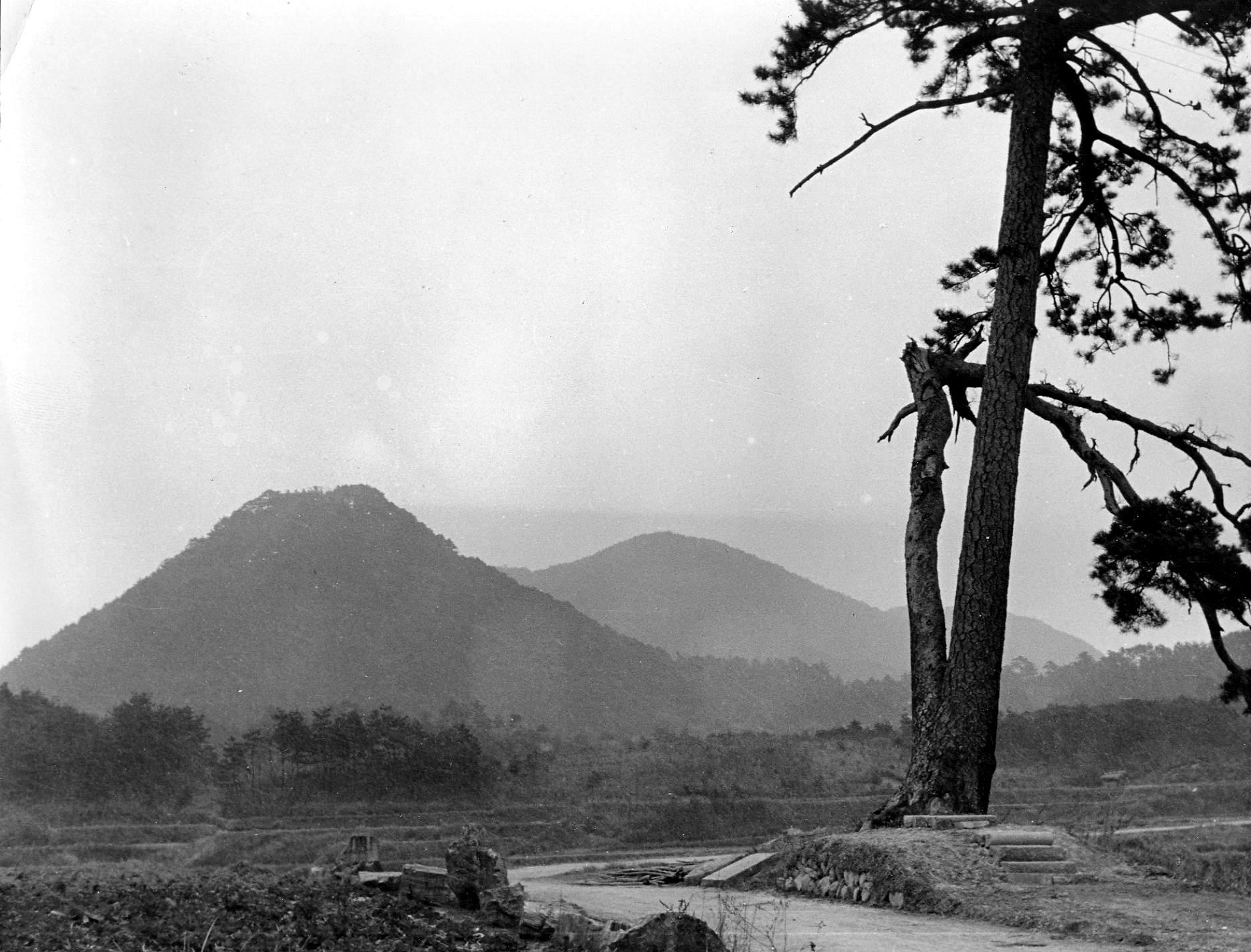 S26夫婦松と丸山