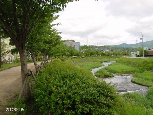 ホタルの住みやすい環境 万代橋付近