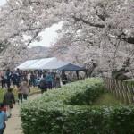 有馬川沿い 桜まつり
