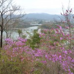 南参道から金仙寺湖