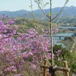 南参道から金仙寺湖を眺む
