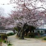 春道公園16-8