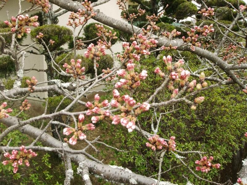城の垣内稲荷神社329