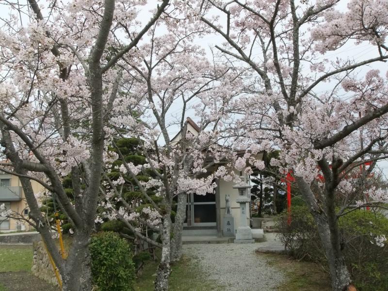 城の垣内稲荷神社 満開405