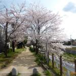 春道公園16-11