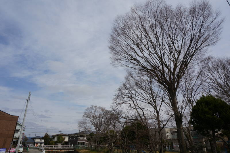 廿日田公園