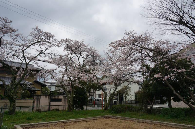 20170409名来(かえる)公園