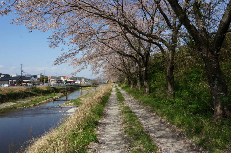 20170416有馬川東岸桜のトンネル