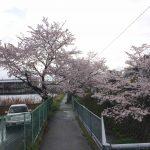 20170409さくら道1
