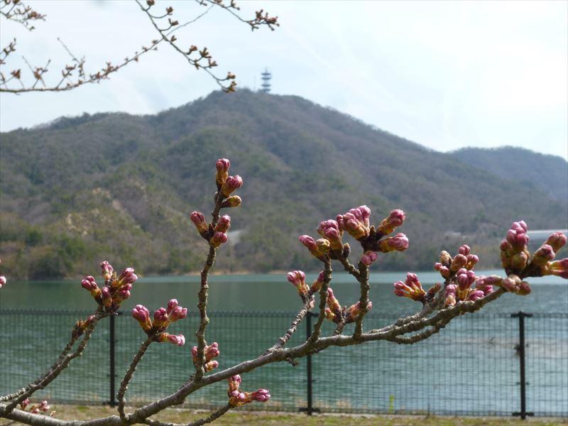 金仙寺湖畔から畑山を望む