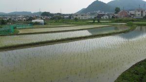 上山口田園風景