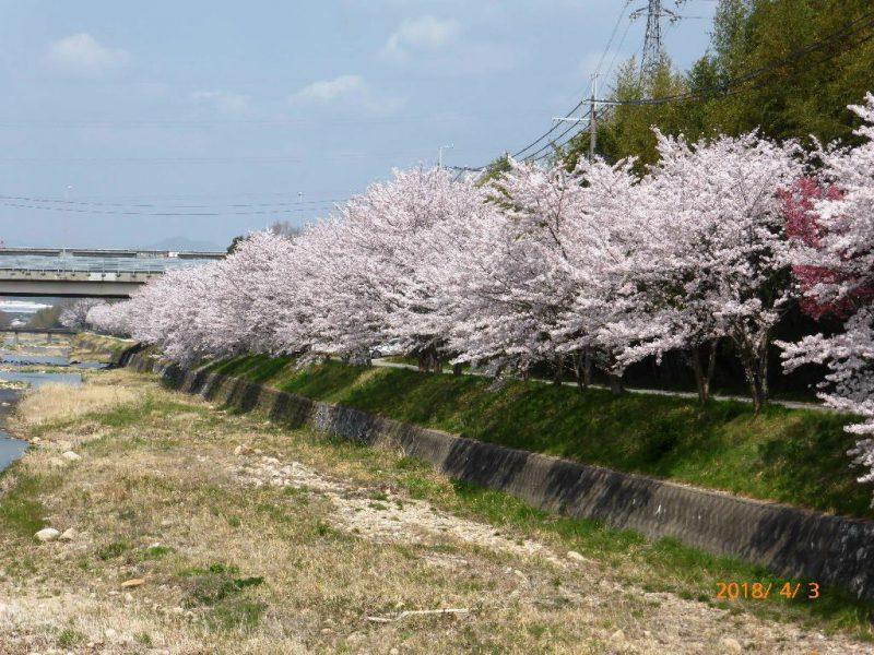 天寿橋付近4