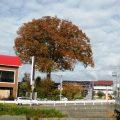 紅葉が始まっています!
