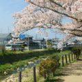 桜スポットを巡るハイキングコース