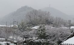 上山口2月11日積雪1