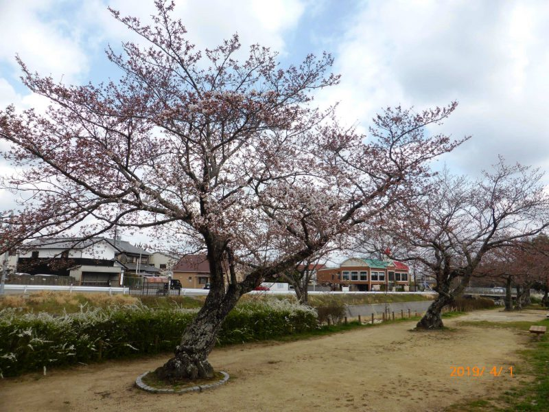 山口春道公園2019.4.1