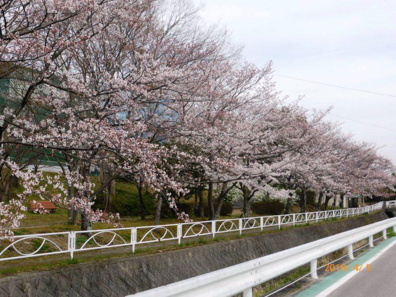 下山口公園2019.4.5