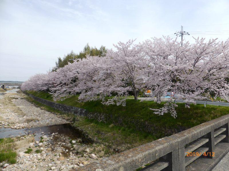 天上橋付近 2019.4.12