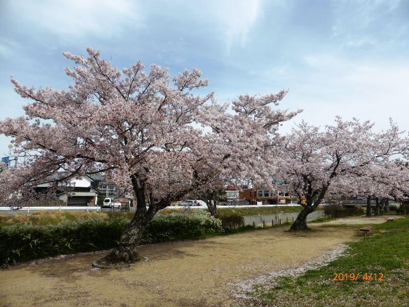 山口春道公園 2019.4.12