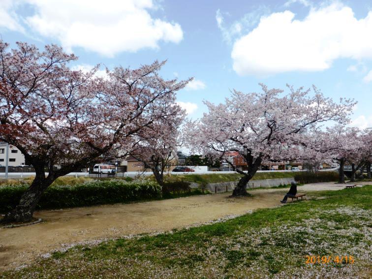 山口春道公園 2019.4.15